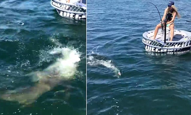terrifying video captures a shark attacking a fishing line