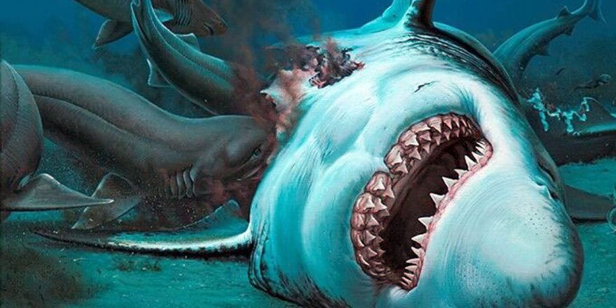 Teeth From Extinct Mega Shark Twice The Size Of Great